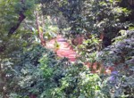 Atenas-Jungle-House-with-over-10-acres-land-to-develop-–-Rural-Nature-and-Stunning-Views-19.jpg