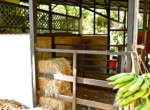 Atenas-Jungle-House-with-over-10-acres-land-to-develop-–-Rural-Nature-and-Stunning-Views-20.jpg
